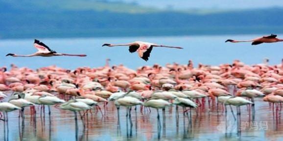 肯尼亚旅游景点